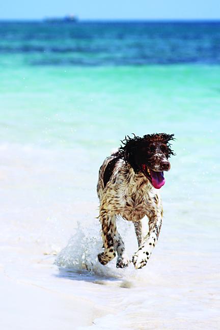 Bayfield Dog Friendly Beach